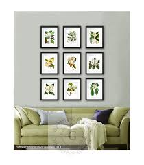 magnolia botanical print set 9 botanical