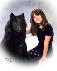 belgian sheepdog national specialty purple puppy