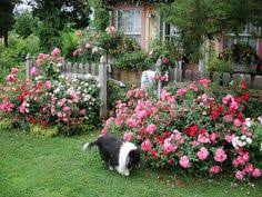 simple design ideas rose garden plans flowers pinterest