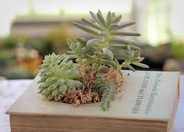 Medusa Planter Indoor Planter Geek Gardens