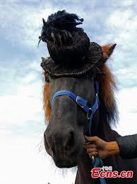 hairstyles for horses horses get prepared for racing with fashion hairstyles