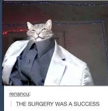 Success Cat Meme - some sort of title here meme by rekzi memedroid
