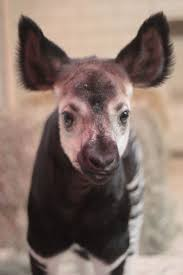 88 best animals always images on pinterest zoos saints and zoo