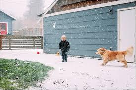 backyard snow december 2016 portland oregon lauren allen