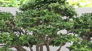 Types Of Gardening Plants Garden U0026 Plant Care Types Of Boxwood Plants Youtube