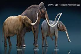 scientists splice mammoth genes unsuspecting elephant u2022