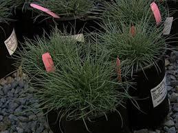 drought tolerant plants diy