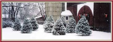 vormittag tree farm christmas trees christmas wreaths tree stands