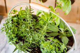 inside herb garden easy indoor herb garden simple 10 minute diy project