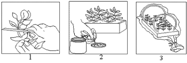 Vegetative Propagation By Roots - plant and soil sciences elibrary