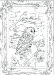 62 owl coloring pages images coloring books