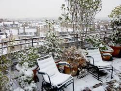 winterharte pflanzen balkon pflegeleichte und winterharte pflanzen für den balkon hausgarten net