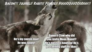 Crazy Wolf Meme - crazy wolf meme wolf best of the funny meme
