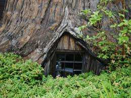 famous tree houses window to the tree house picture of world famous tree house