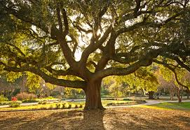 the secret meaning behind 11 common trees