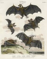antique prints of from rees cyclopedia
