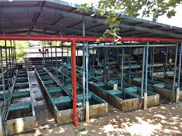 qianhu fish farm somewhere to bring your this june holidays