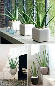best indoor house plants bathroom identifying house plants best indoor plants indoor plant