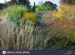 marchants sussex early autumn fall borders perennials ornamental