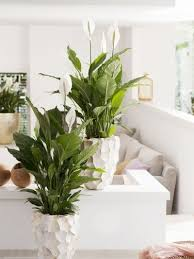 plants that grow in dark rooms house plants for your dark side ferndale garden centre