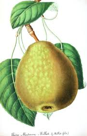 lychee fruit drawing 139 best eat your fruits u0026 vegetables images on pinterest