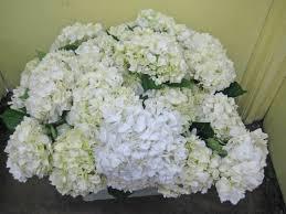 bulk hydrangeas hydrangea centerpieces eugene wholesale flowers