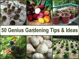Garden Tips And Ideas 50 Genius Gardening Tips Ideas Jpg