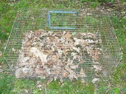 could this all wire cage be used for coturnix quail backyard