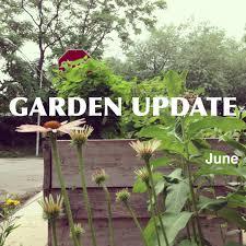 chicago native plants june garden update native plants and summer strawberries moss