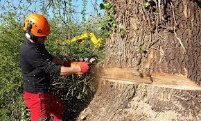 acorn tree work specialist tree surgeons in banbury