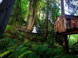 Treehouse Point Wa - 18 super cool and quirky wedding destinations tripstodiscover com