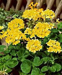 1958 best flower images on pinterest flowers garden ideas and