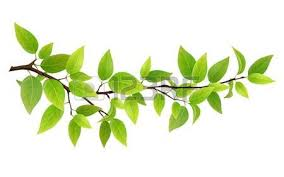 tree stock photos royalty free tree images and pictures