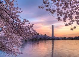 best of the 2018 cherry blossom festival washington d c