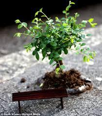 the artist who plants tiny trees in potholes