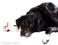 bauchspeicheldrüsenschwäche bauchspeicheldrüse exokrine pankreasinsuffizienz beim hund