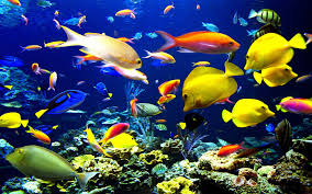 beautiful fish hd wallpapers free download