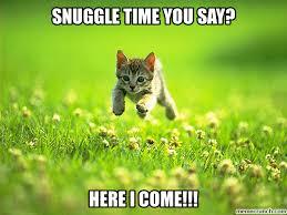 Snuggle Meme - cat
