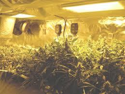 meilleur chambre de culture chambre de culture complete cannabis 30 meilleur design idée