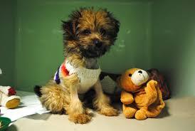 breeding bad u2013 the true cost of irresponsible pet breeding blue