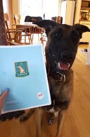 belgian shepherd quebec quebec archives dognition