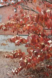 November Flowers Fall Color Uri Botanical Gardens Blog Page 2