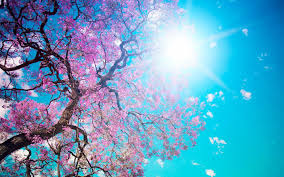 beautiful spring relaxation lounge del mar chill out mix youtube