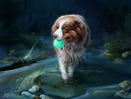 t jag s australian shepherds lucy u0027s favorites vol 98 by lucytherescuedcat on deviantart