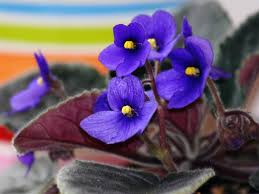Best Fragrant Indoor Plants - 15 best indoor plants for fragrance boldsky com