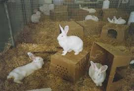 rabbit material refinement and enrichment for rodents and rabbits environmental