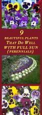Winter Vegetable Garden Southern California Best 25 Texas Fall Garden Ideas On Pinterest Fall Planting