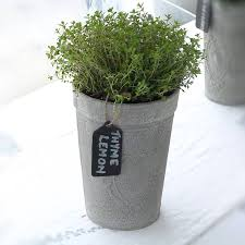 Kitchen Herb Pots by Top 5 Herbs To Grow Indoors U2014 Staghorn Nyc