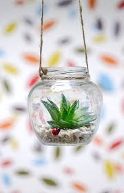 plant a succulent in a clear hanging glass jar maybe recycle a