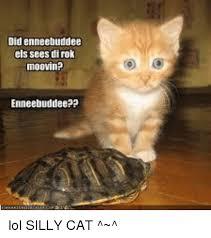 Silly Cat Memes - did enneebuddee els sees dirok moovin enneebuddeepp lol silly cat